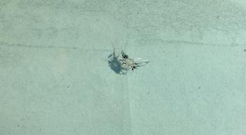 Old windshield chip repair